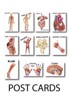 Cartes Postales Anatomie Lot de 3